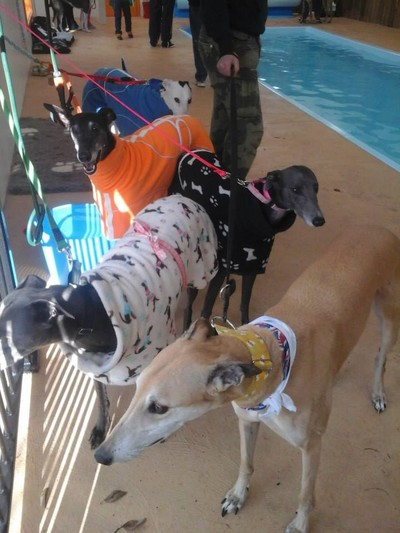 Greyhound Rescue Victoria Fun Day